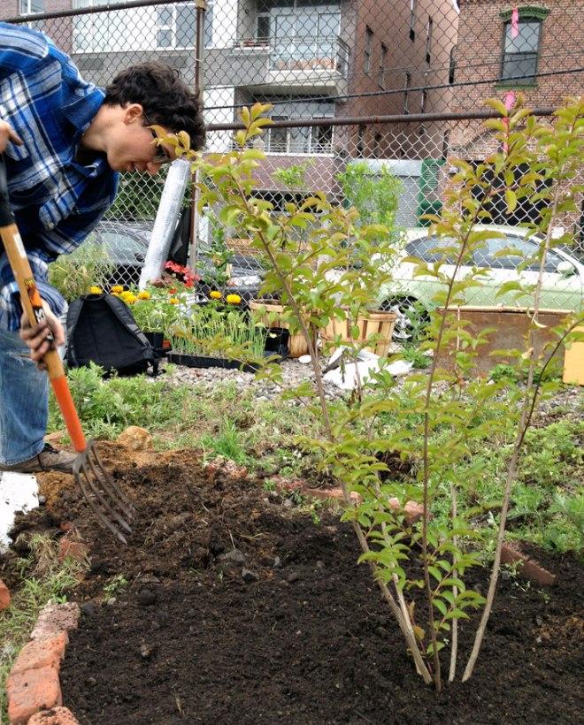 treeplanting4